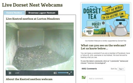 An empty nestbox!