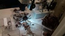 Shed exoskeletons of spiders I presume