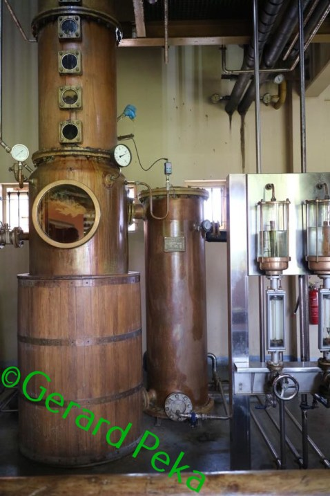 fermentation (1)