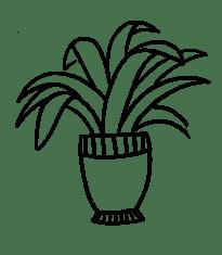 Plant 17