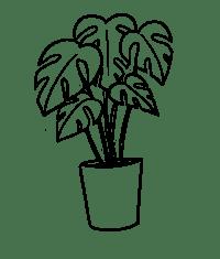 Plant 8
