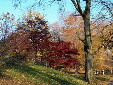 Fall colour in Greenwood Cemetery.