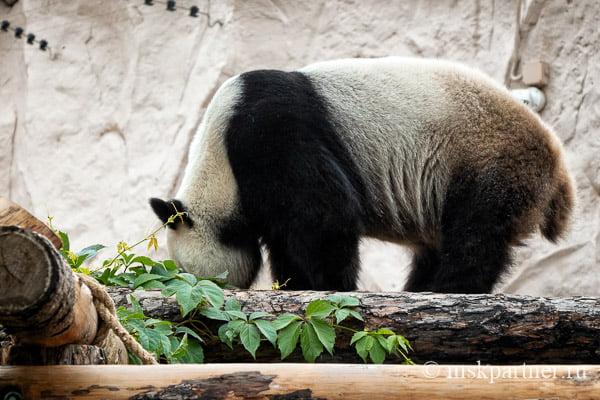 Московский зоопарк на Баррикадной
