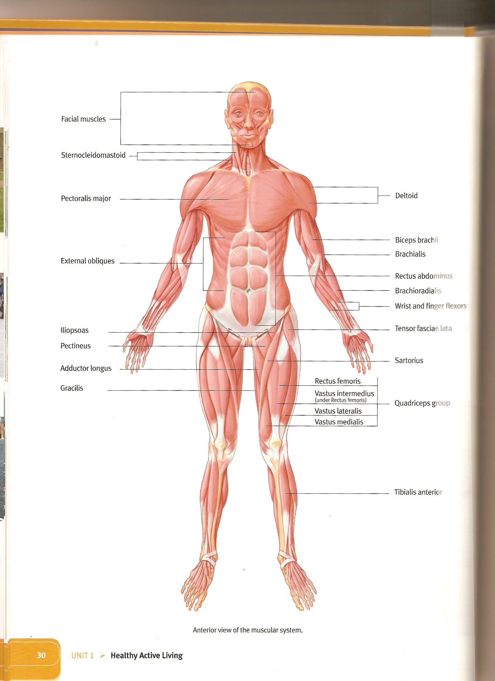 Human Tissue Worksheet Overview