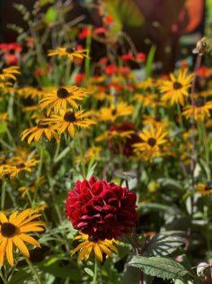 new chelsea flower show 2021 pic- Kerstin Rodgers-msmarmitelover - 27