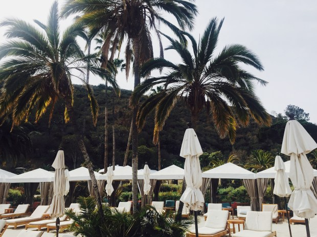 Beach, Ocean, Island, Vacation, Resort, Palm Trees, Catalina Island, Avalon,