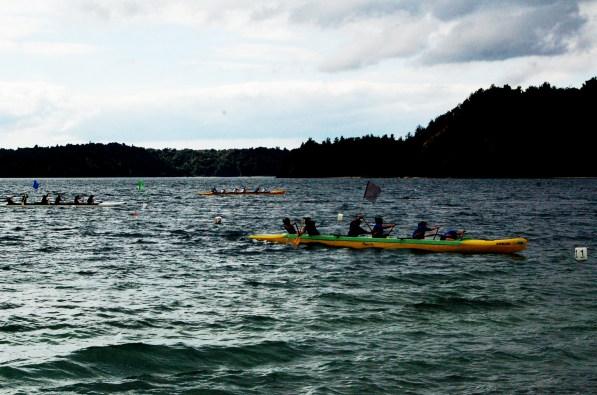 canoe race. whakatane, new zealand.