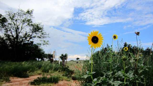 flower-min.jpg