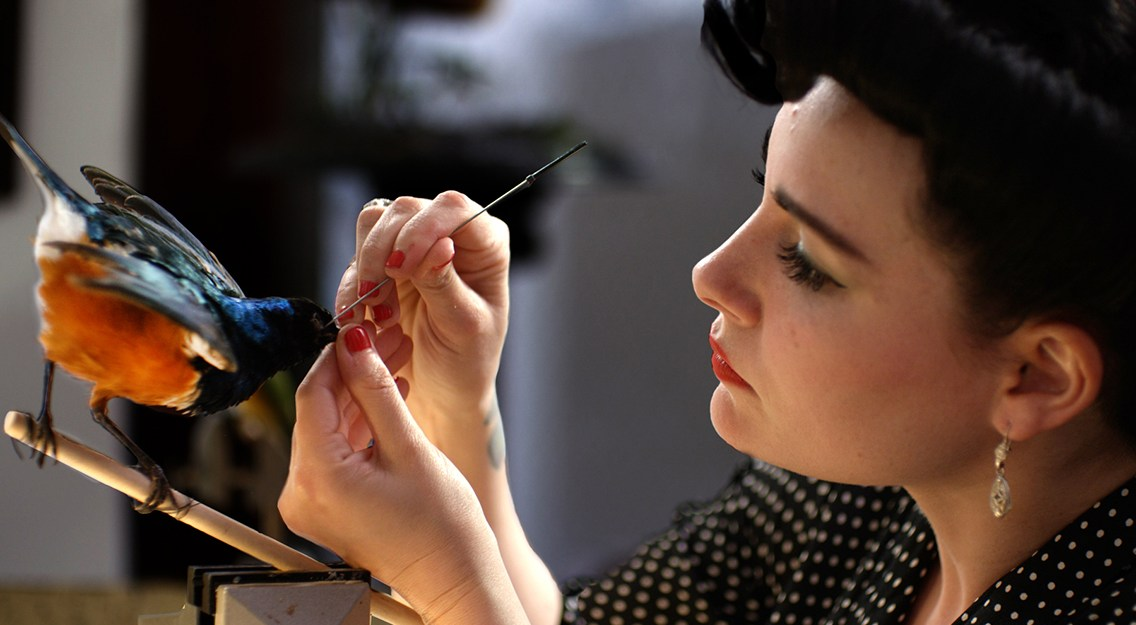 Artistic expression lives in the world of Taxidermy