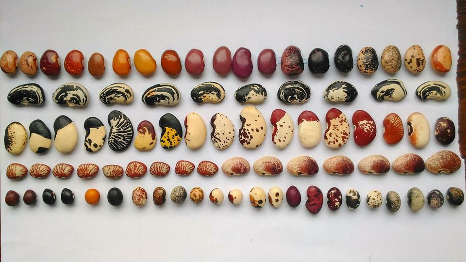 Une définition des semences paysannes