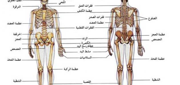 مكونات الجهاز العظمي موقع مصادر