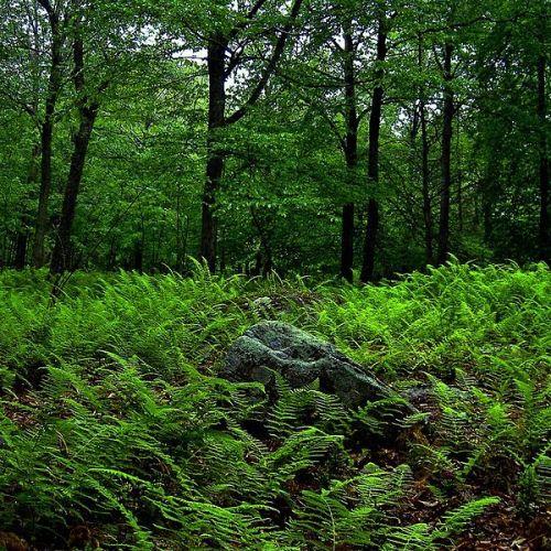 800px-plsp_memories_of_green