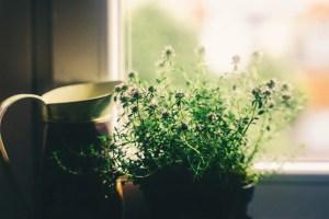 flower, window, house