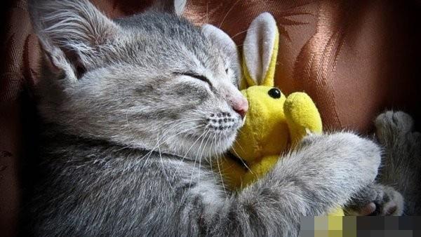 cats love sleeping 01