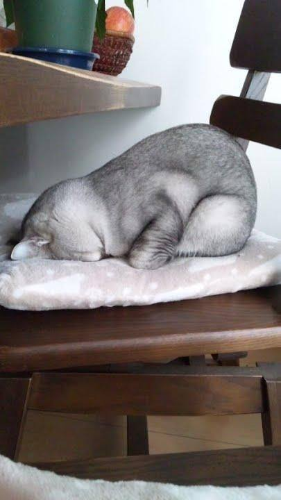 cute cats sleep like this tyle 02
