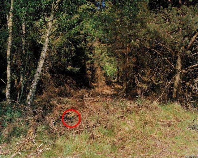狙擊手隱身出任務  找到眼睛快瞎了還是找不到 14