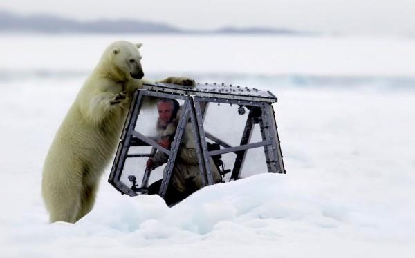 咬我啊!瘋狂攝影師以肉身吸引北極熊