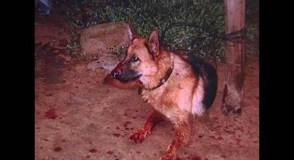 留下狗照顧嬰兒,回來卻看見狗滿口是血,原因竟然是…
