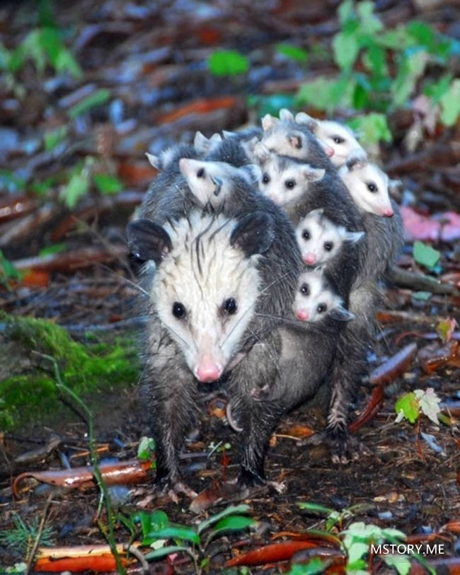 20張超溫馨的動物一家親貼圖!