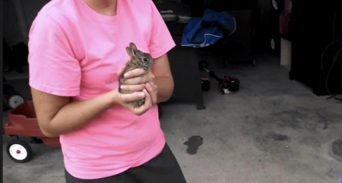 愛心家庭照顧受傷野兔 放生的那一刻全家都崩潰了......