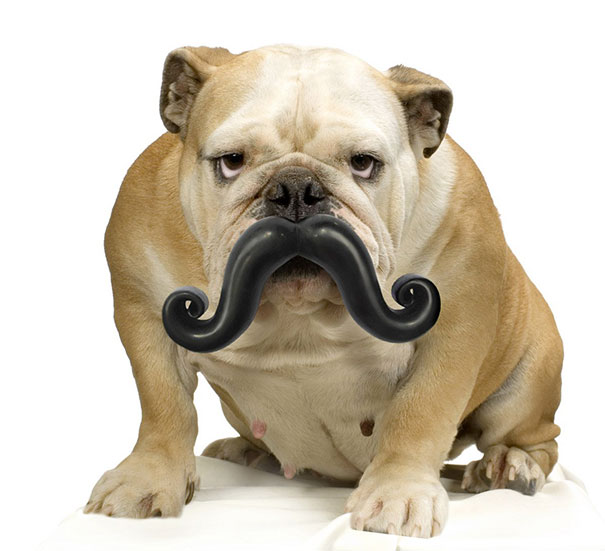 這些狗狗喜歡的玩具,分分鐘逗樂你,讓你看到笑到根本停不下來。