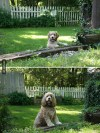 before and after dogs 12