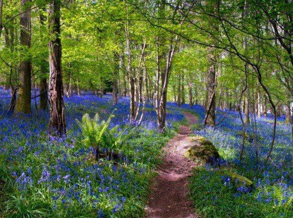 请从这6个森林图片中选出一条你想走的路,这将会透露出你内心性格和感情的追求!