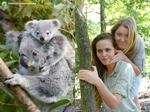 不好好工作真的可以嗎?澳洲動物飼育員掀起模仿照熱潮 ...