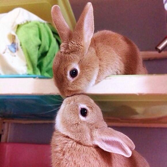 原来兔子萌起来也是所向披靡啊