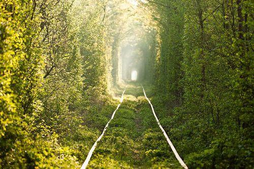 全球十大最美林蔭隧道