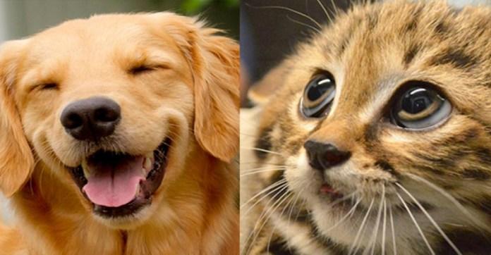 超中肯!!养猫跟养狗的区别,第五个真的太好笑了!!养猫的主人们你们辛苦了...