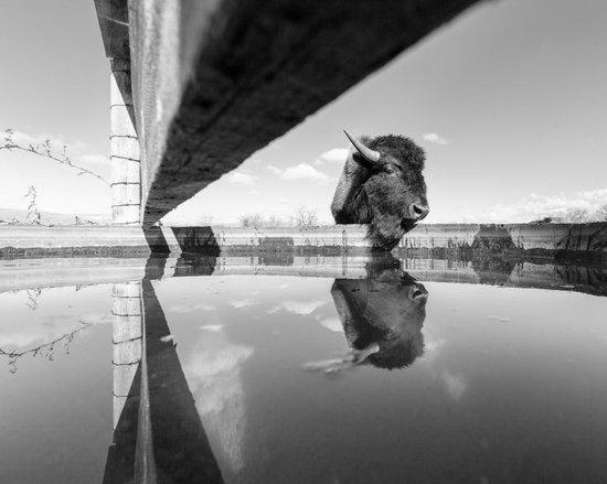 2015年六月國家地理最佳投稿攝影作品賞析
