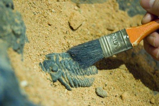史上五大最奇異的化石發現,聞都色變!