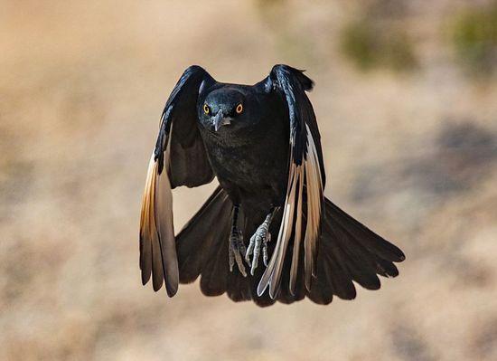 南非攝影師近距離抓拍動物捕獵飛行瞬間