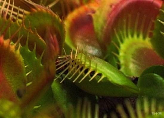 10個原因說明植物比動物更加有情感,只是你不曾發現!