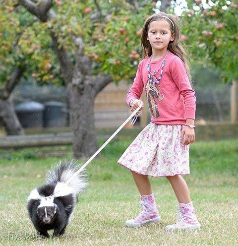 這才叫養寵物,你那只能算貓奴!