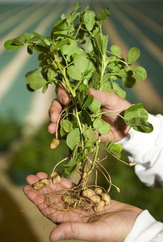 常吃的蔬菜水果,990%的人完全沒見過它們的生長過程這麼爽!