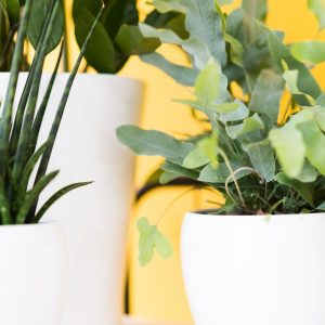 Planten M Style interieur