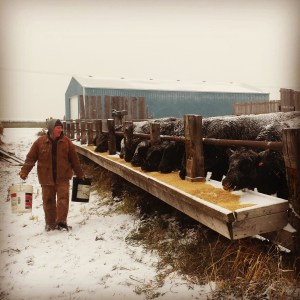 Canadian Rancher Feeding Cattle