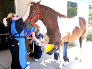 Pima Medical Institute veterinary technician students learn how to X-ray a horse's leg during class.