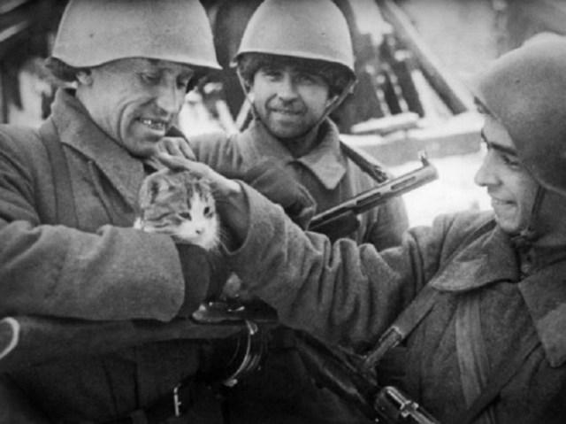 В минуты отдыха на фронте война, фото, фотокорреспондент