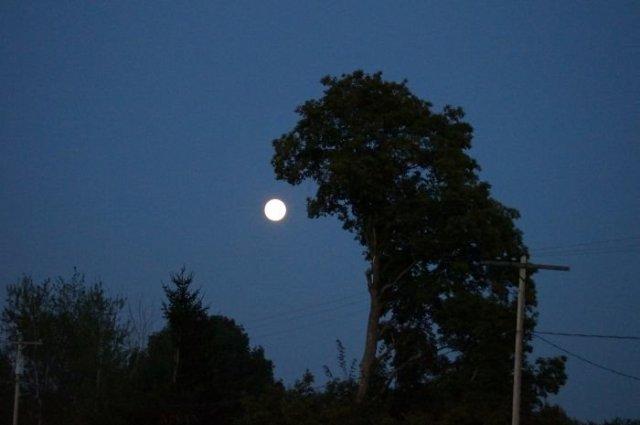 17. Wood-godzilla va dévorer l'arbre de la lune, les arbres, la tromperie, la pareidolia, il semble oui et pas pareil, on dirait que ça ressemble à un visage