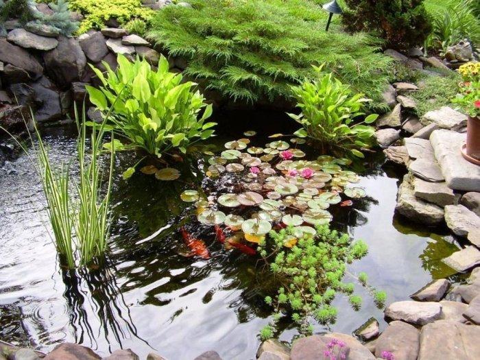 Декоративный водоем, отлично имитирующий природную экосистему.