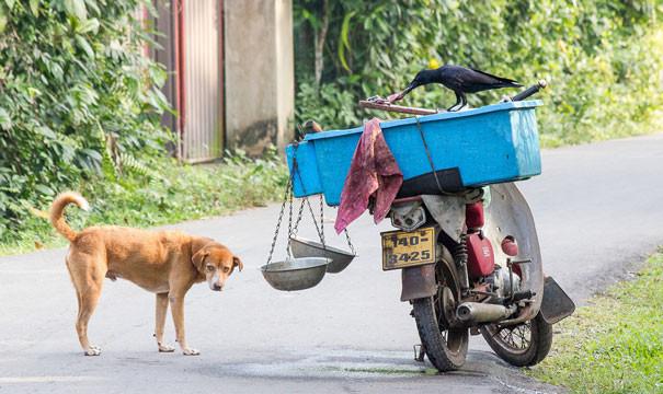 Уличена в воровстве вороны, животные, птицы, фото