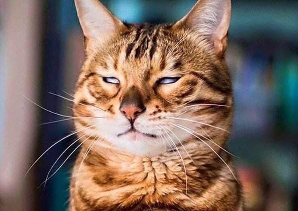 Кошка ненавидит, когда вы мяукаете на нее