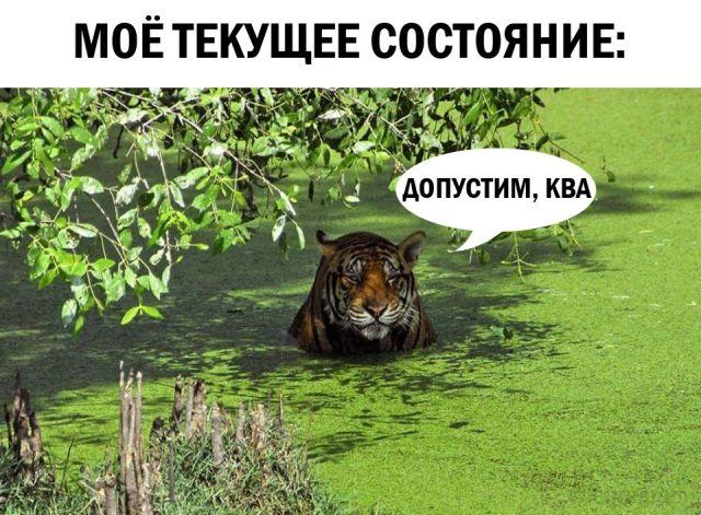 Google Новости - Водка - Последние