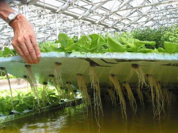 Технология выращивания комнатных цветов без почвы