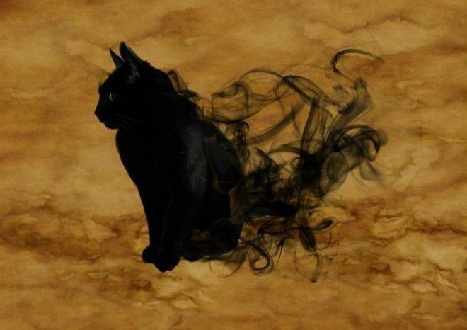 10 замурчательных фактов о черных кошках животные, коты, факты