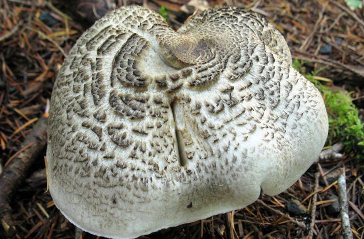 10 видов ядовитых грибов, которым нечего делать на вашей кухне