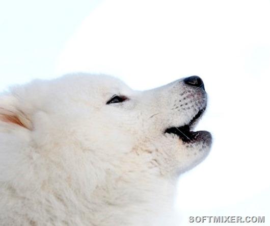 Собаки: интересные факты о наших четвероногих друзьях